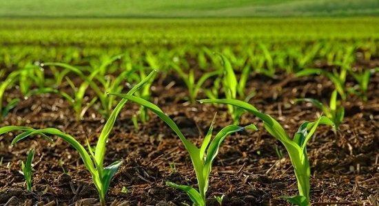 مسائل آموزشی رشته کشاورزی آسیب شناسی می گردد