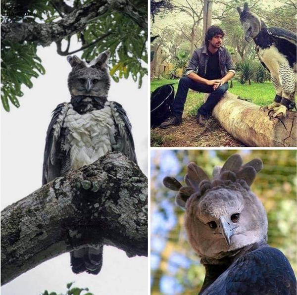 پرنده عظیم الجثه ای که باور نمی کنید واقعی باشد!
