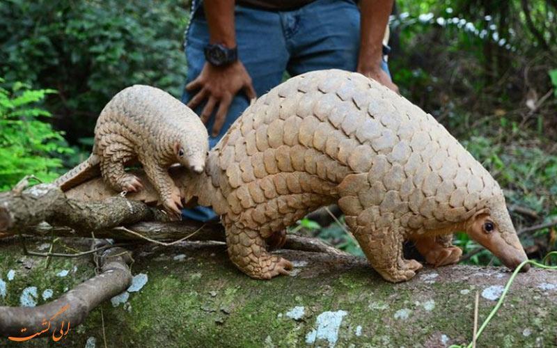 حیوانات عجیبی که تنها با سفر به مالزی خواهید دید!