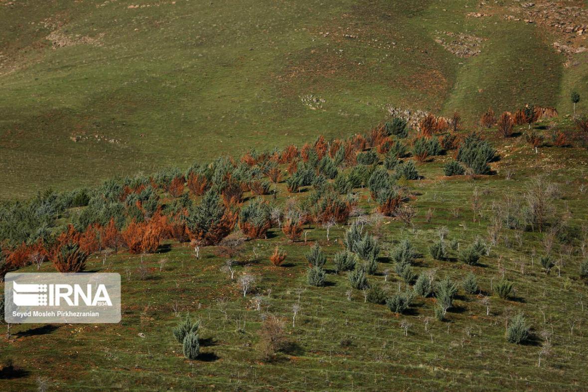 خبرنگاران ایجاد کمربند محافظتی در عرصه های طبیعی پرتخریب خراسان شمالی