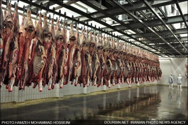 سرنوشت مرغ در انتظار گوشت قرمز